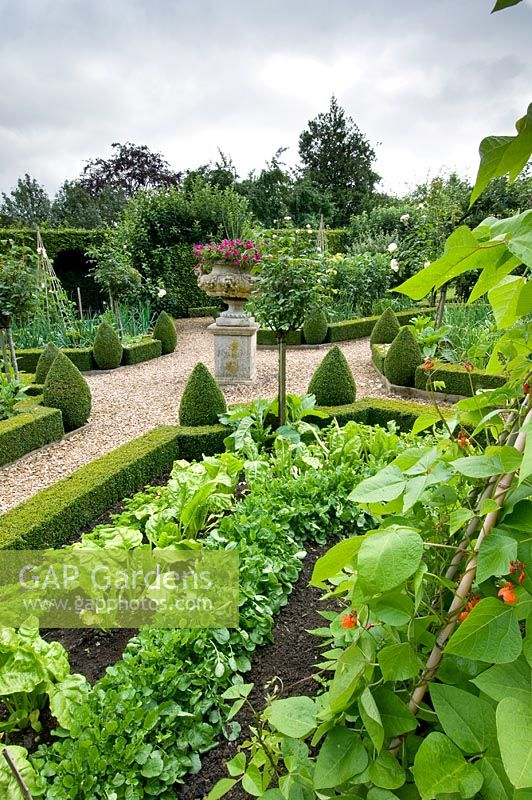 Potager with gravel paths, box edged vegetable borders, Petunias in central urn and pyramid topiary - Sheephouse, Painswick, Gloucestershire