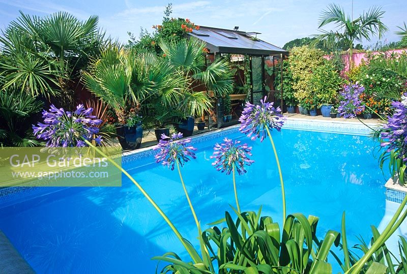 Gap gardens mediterranean style garden around swimming for Gardens around pools