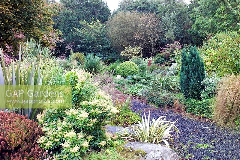 Gap gardens beds with ornamental grasses and evergreen for Ornamental grass bed