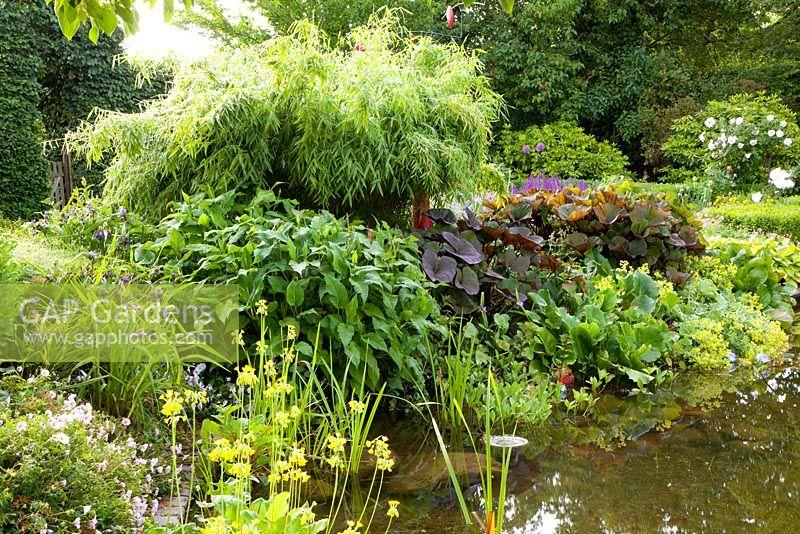 Gap gardens marginal planting around pond of bamboo for Plants around garden pond