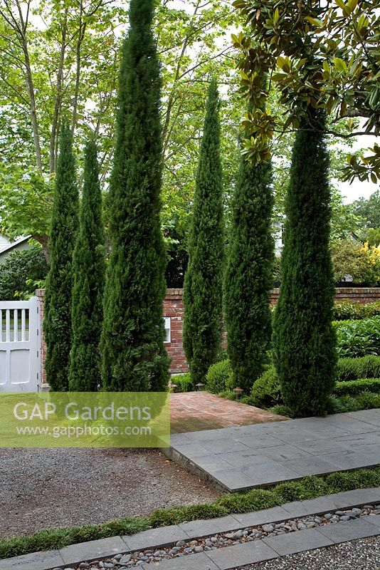 Entrance to suburban garden, with bed of Cupressus sempervirens - Italian Cypresses flanking entrance. Christchurch, New Zealand