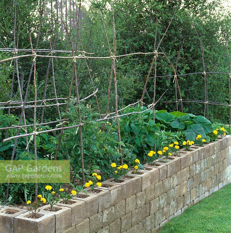 Gap Gardens Tomatoes Growing In Cinder Block Raised Bed