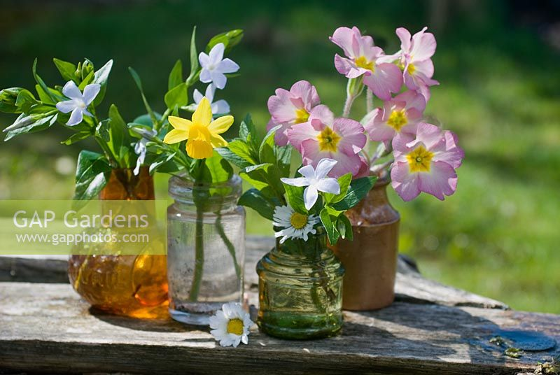 Spring flowers in glass jars. Primula polyanthus, Narcissus 'Tete a Tete' and Vinca.