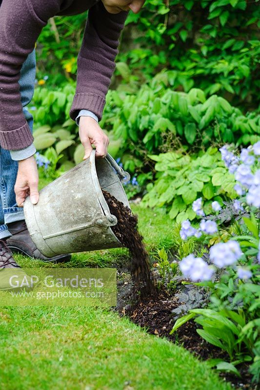 Woman mulching plants in a border with garden compost