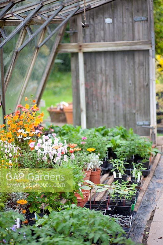 Greenhouse At Eastgrove Cottage Garden Nursery
