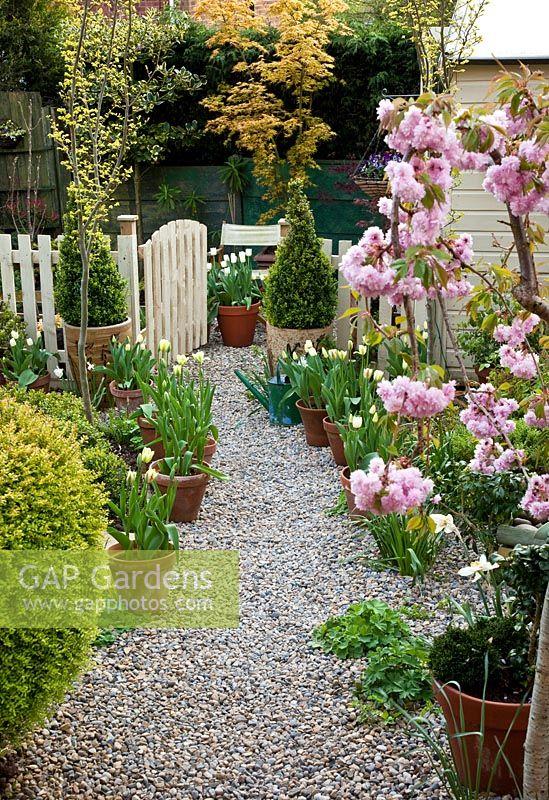 GAP Gardens - Spring gravel garden with Prunus \'Kiku-Shidare-Zakura ...