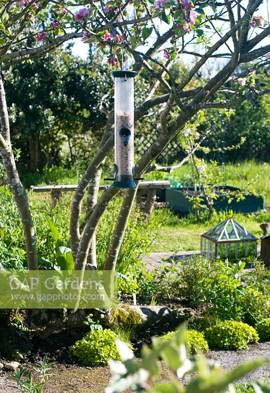 Bird seed feeder in apple tree