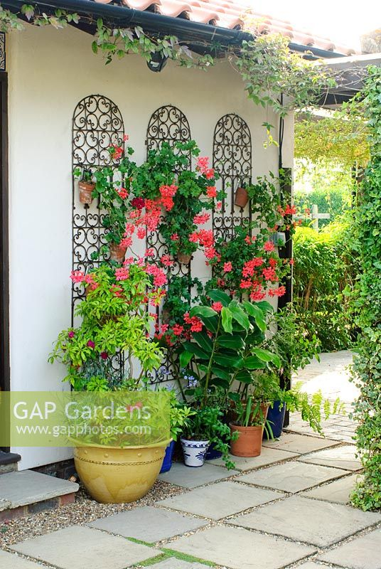 Attractive Decorative Moroccan Style Ironwork Screens Used To Hang Wall Pots With Ivy  Leaved Pelargoniums   Geraniums