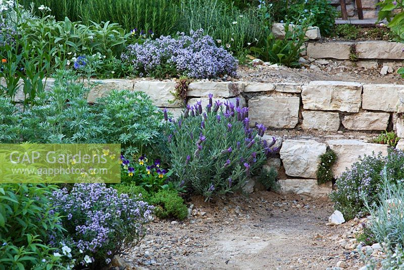 Steps through sloping Mediterranean style garden planted with Lavandula - Lavender and herbs. The L'Occitane Garden, Silver medal winner at RHS Chelsea Flower Show 2010
