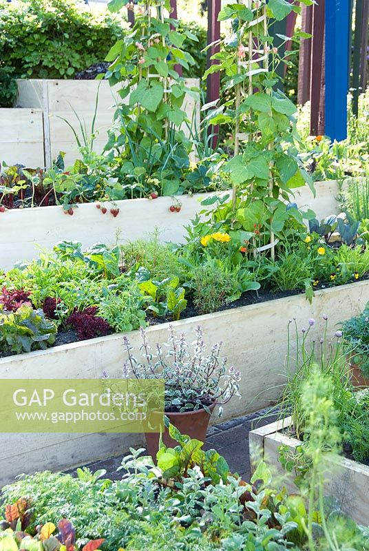 Gap gardens terraced vegetable garden with raised beds for Terrace vegetable garden by harikumar