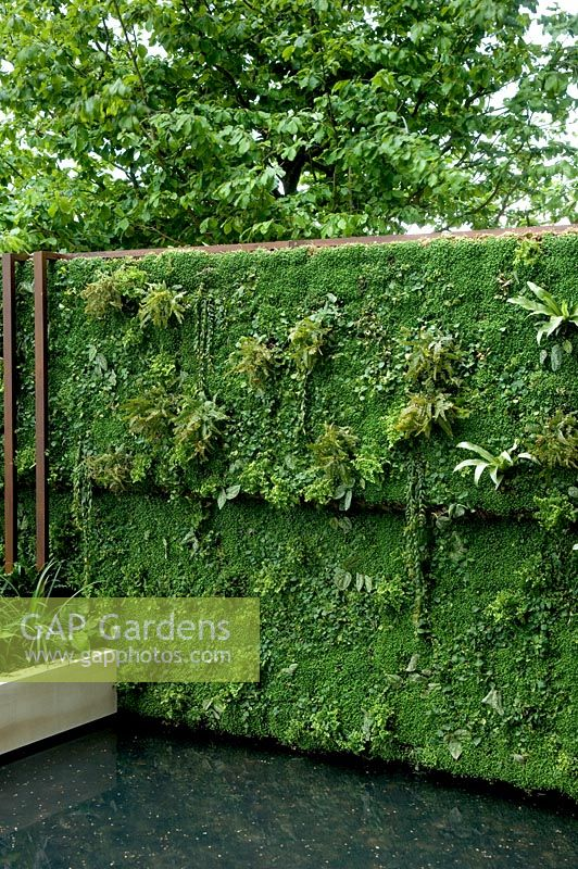 Gap gardens living wall and pond the tourism malaysia garden gold medal winner rhs chelsea - Chelsea flower show gold medal winners ...