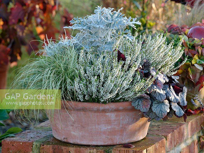 Container Planting For Autumn Colour   Calluna Garden Girls U0027Aliciau0027, Carex  Comans U0027