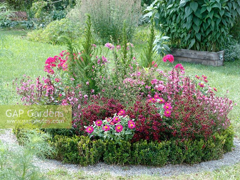 Buxus edged circular bed with Zinnia, Coreopsis tinctoria 'Mahogany', Gaura lindheimeri 'Lillipop Pink', Anisodontea, Phlox and Eupatorium 'Elegant Feather'