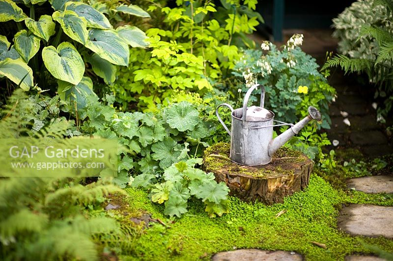 Vintage watering can on a tree stump in a shady garden with ferns, Heuchera, Hosta and Soleirolia soleirolii