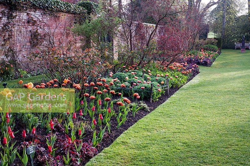 GAP Gardens - Formal mixed Tulipa border including Tulipa \'Jane ...