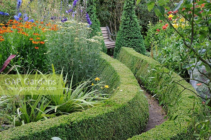 Summer garden with clipped Lonicera hedge bordering path leading to garden seat, Norfolk, Uk, July