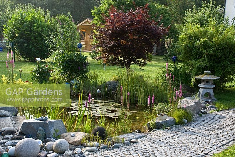 Gap gardens pond in japanese style garden mixed planting of nymphaea lythrum typha iris - Mixed style gardens ...