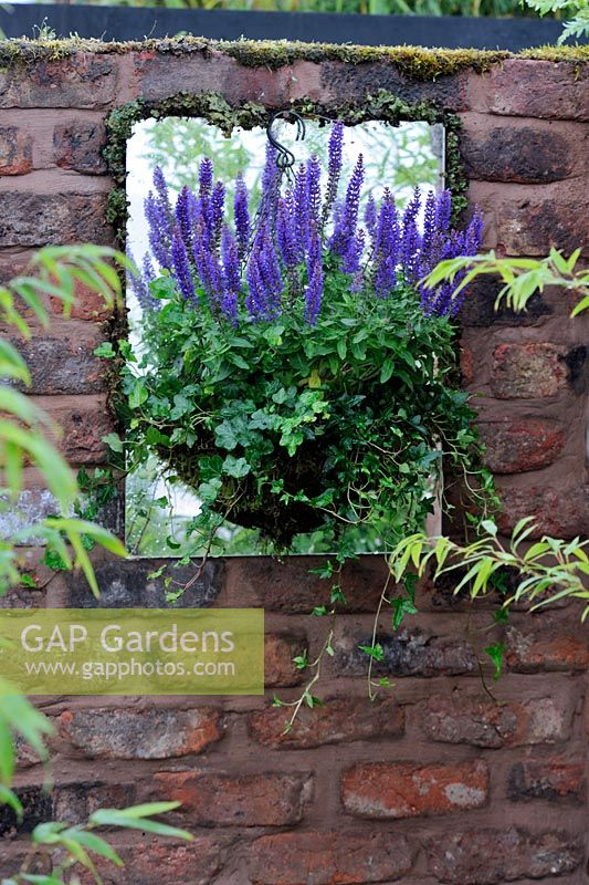 Salvia in hanging basket agianst a mirror on old brick wall giving the illusion of a window - RHS Tatton Park flower show 2010