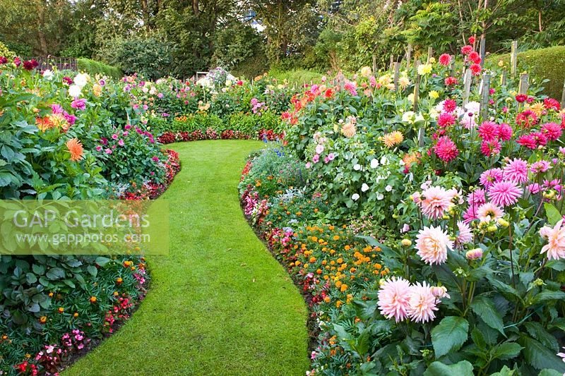 GAP Gardens Wavy lawned path between borders with Dahlia