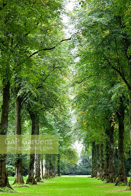 Tree avenue at Westonbirt Arboretum, Gloucestershire
