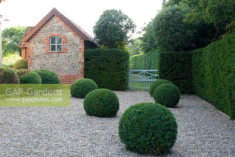 GAP Gardens Buxus sempervirens Box balls in gravel with Taxus