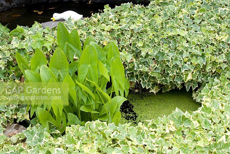 Gap gardens small sunken garden pond surrounded by for Garden pool duckweed