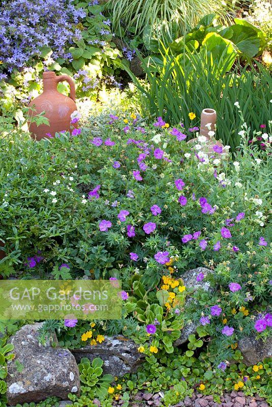 Rock Garden Border With Campanula, Saxifraga And Geranium