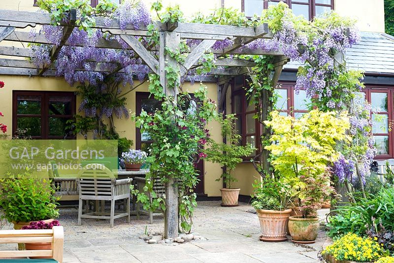 Pergola With Wisteria And Clematis Growing