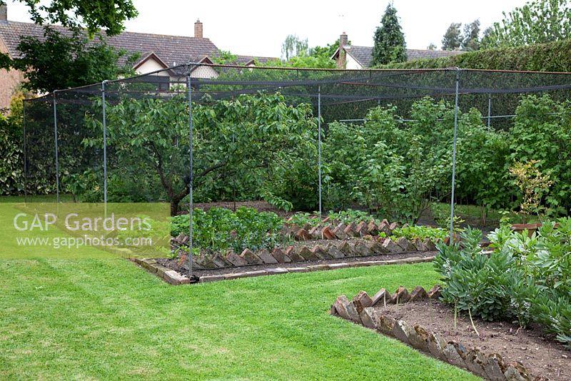 GAP Gardens Fruit cage in vegetable garden with brick edging