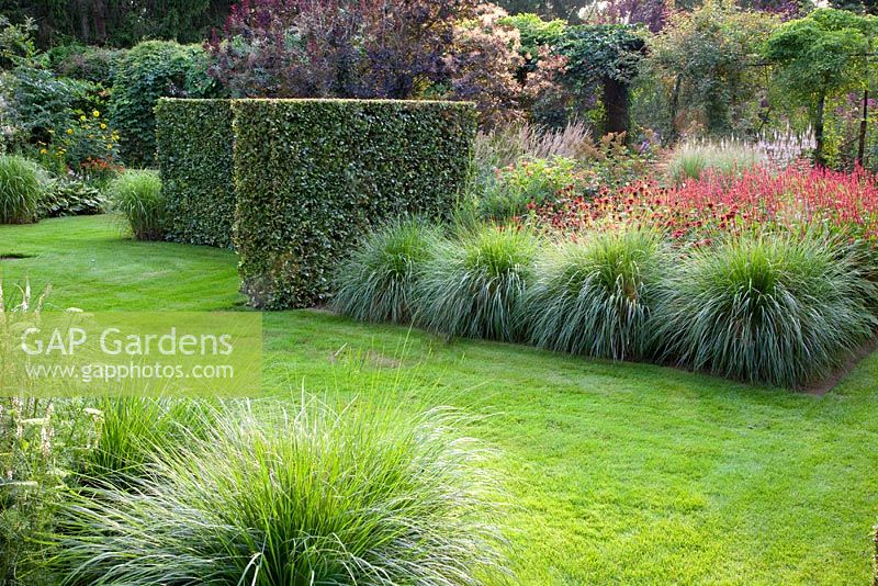 Gap gardens pennisetum alopecuroides 39 hameln 39 and for Ornamental grass border design