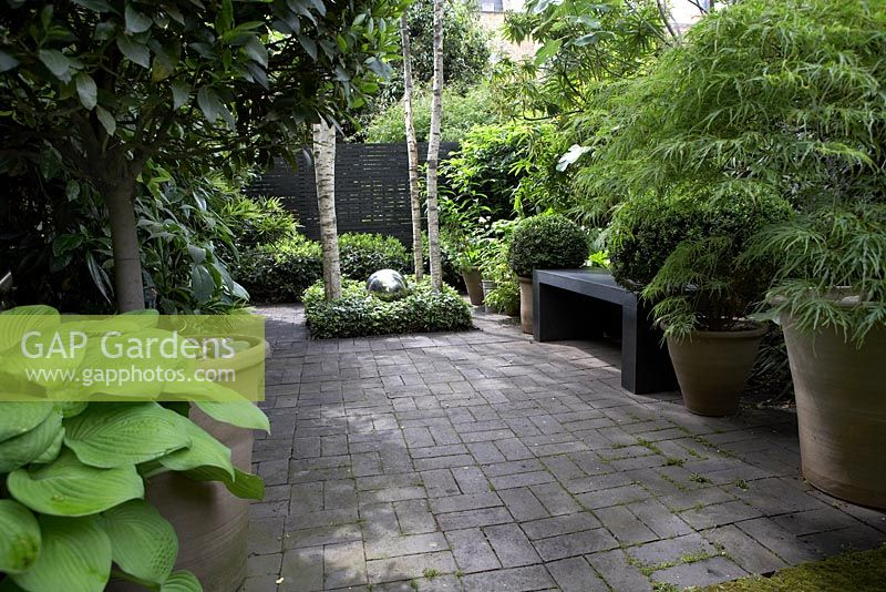 Gap gardens pots with box balls hosta standard bay for Silver birch trees for small gardens