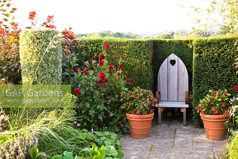 Wooden throne style seat with carved heart, Fuchsia in clay pot and clipped Rhamnus alaternus argenteo 'Variegata'