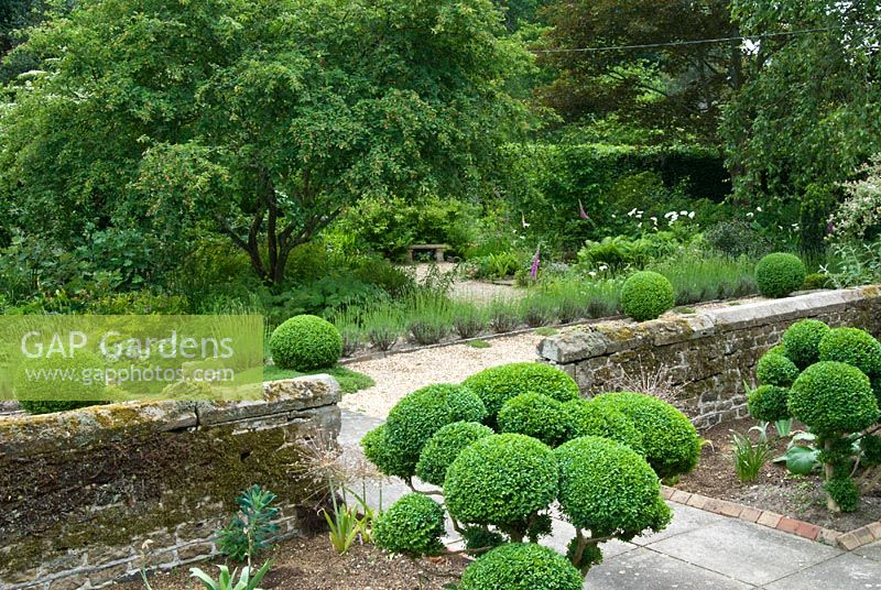 Cloud topiary Buxus - Box in front garden, Sandhill Farm House, Hampshire.