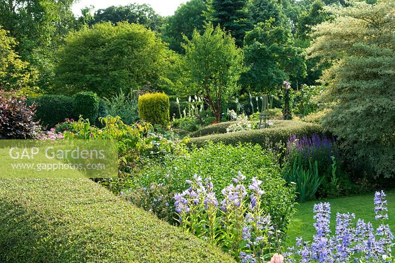 Traditional English country cottage garden. View over hedge to borders of Cornus controversa 'Variegata', Campanula and Nepeta. Carol and Malcolm Skinner, Eastgrove Cottage, Worcs, UK