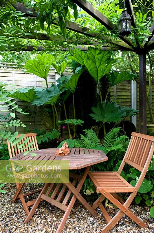 Gravel patio in small urban garden with wooden folding table and chairs under pergola. Gunnera and Ferns behind.