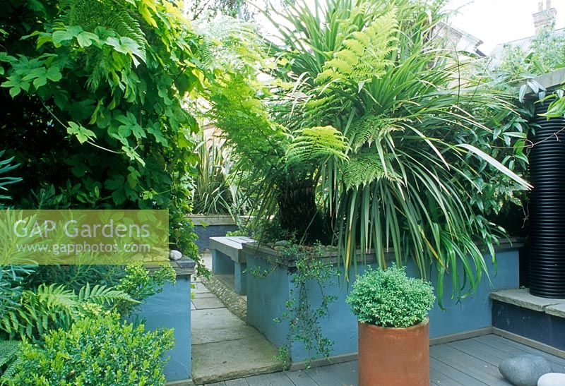 Gap Gardens Small Town Courtyard Garden With Paving Slab Path. Tropical  Plants Chusan Palm