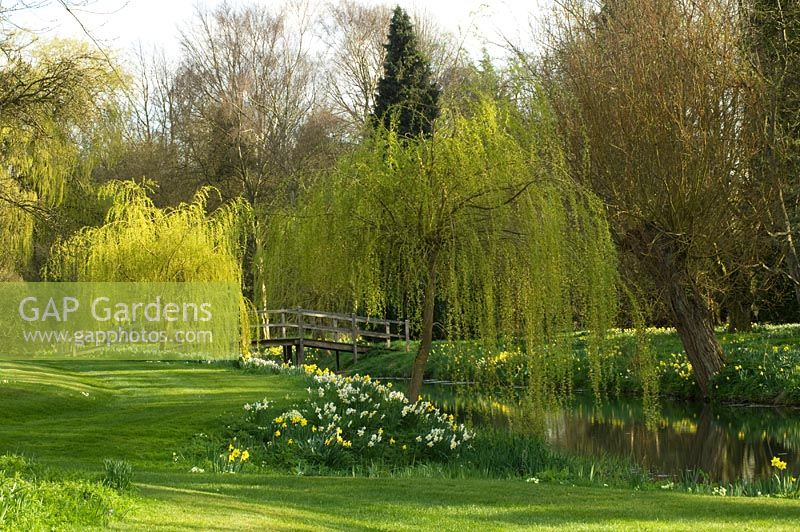 Lake in country garden in spring. Great Thurlow Hall, Suffolk, UK