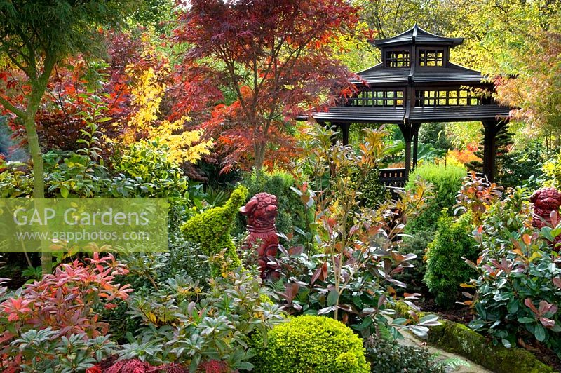 Autumn oriental themed garden with colourful foliage contrast. Taxus - Yew topiary animals, Photonia x fraseri  'Red Robin',  Acers, Ilex - Holly and pair of dog ornaments. Tony and Marie Newton, Walsall, UK, October