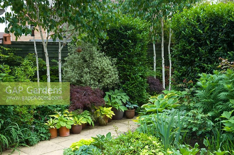 Gap Gardens Small Urban Garden With Paved Path And