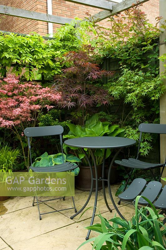 Small urban garden with seating area and planting of Acer and Hostas - NGS garden, Foster Road, Peterborough, Cambridge