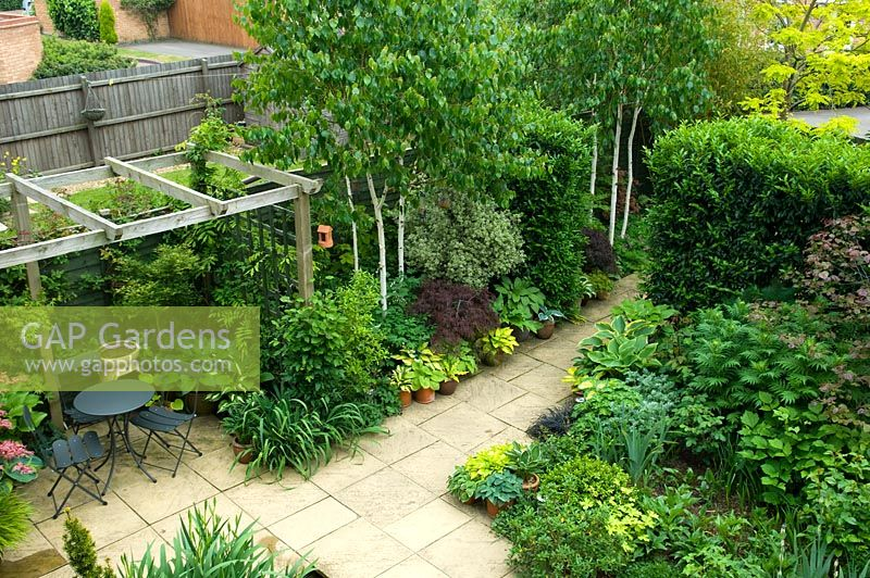 Overview of small urban garden patio with pergola and seating area, planting of Betula and Hostas - NGS garden, Foster Road, Peterborough, Cambridgeshire