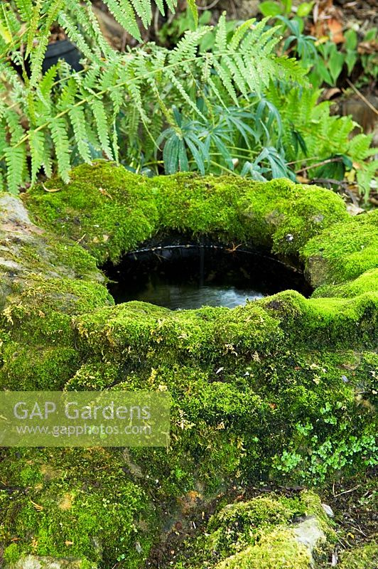 Water well covered in moss