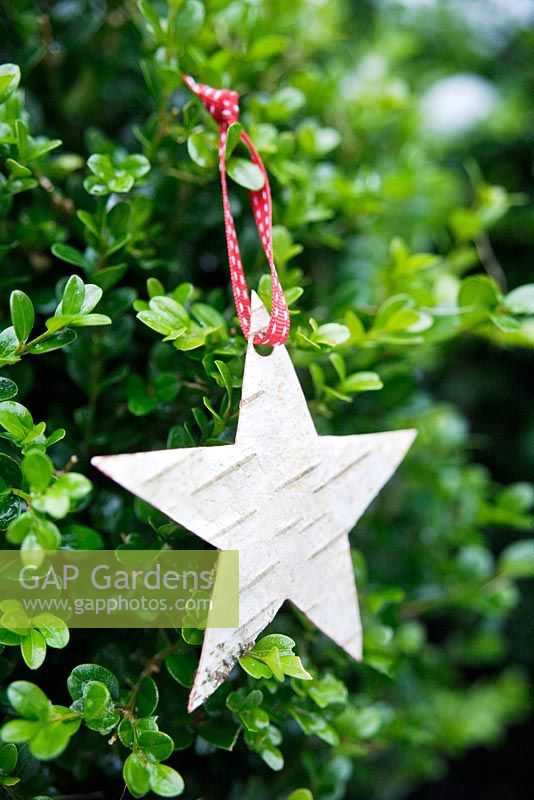 Making Christmas decorations from birch bark - Finished star decoration, hanging in tree