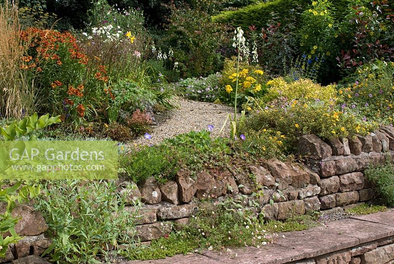 Terracing with red sandstone walls, stone seats and gravel path with late summer borders planted with perennials and grasses including Calamagrostis acutiflora 'Overdam', Helenium 'Rubinzwerg', Salvia patens, Microseris 'Girandole, Spirea 'Candlelight', Galtonia candicans, Potentilla 'Hopleys Orange' and Geranium 'Joy'  at Church View, Appleby-in-Westmorland, Cumbria NGS
