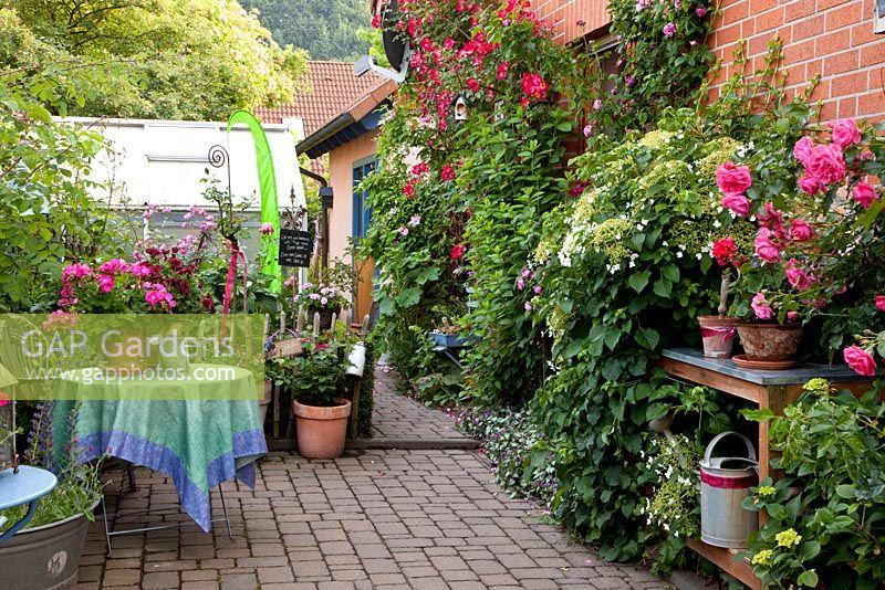Gap gardens brick patio with climbing hydrangea petiolaris and climbing rosa pots of - Care geraniums flourishing balcony porch ...