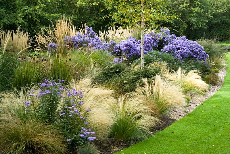 Gap gardens the grasses border at ashwwod nurseries with for Best grasses for borders