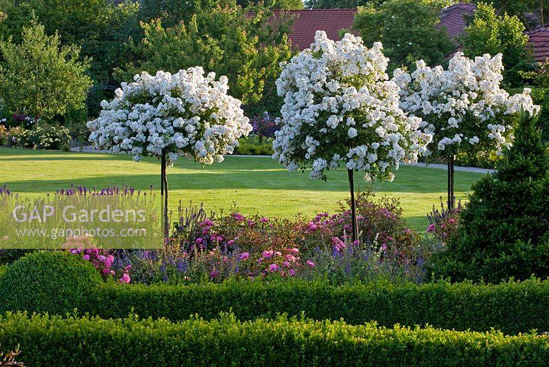 gap gardens summer garden with rambling rosa 39 guirlande. Black Bedroom Furniture Sets. Home Design Ideas