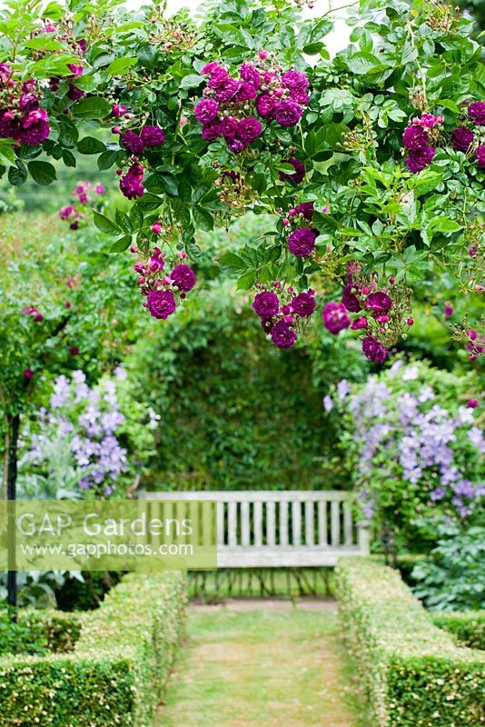 Rosalie Fiennes garden in Somerset with Rosa 'Blue Magenta' growing over arch
