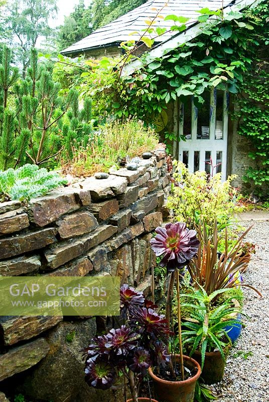 Stone wall planted with Sedums and alpines and decorated with small figurines and statuettes for the benefit of younger visitors. Containers on the ground below planted with succulents including Aeonium 'Zwartkop', Phormiums and Euonymus alatus 'Compactus' - Pinsla Garden, Cardinham, Cornwall