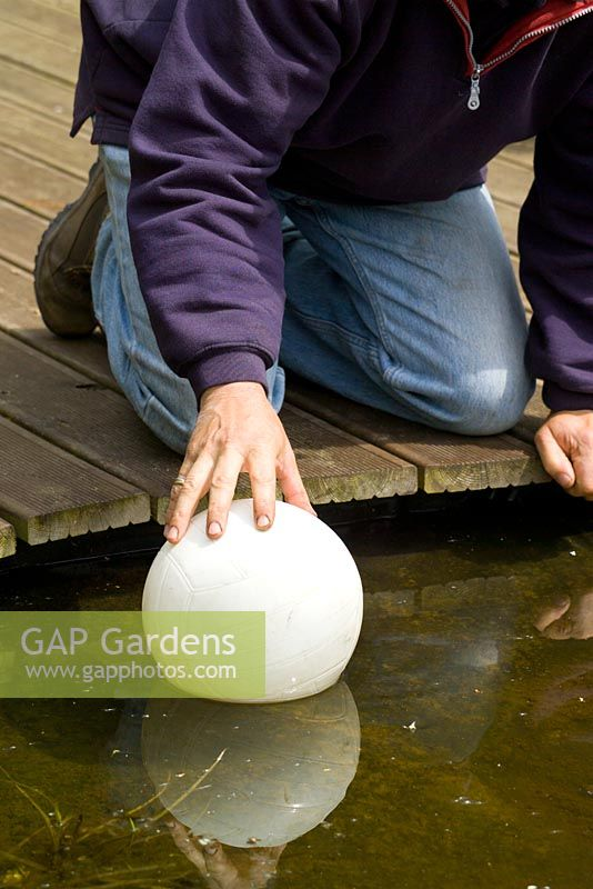 Preparing for winter by placing a football in a pond to stop it freezing over